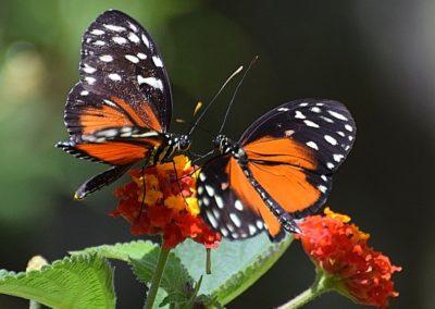 """Week 3 (Title Image """"Butterflies"""" by Julia Cudbard)"""